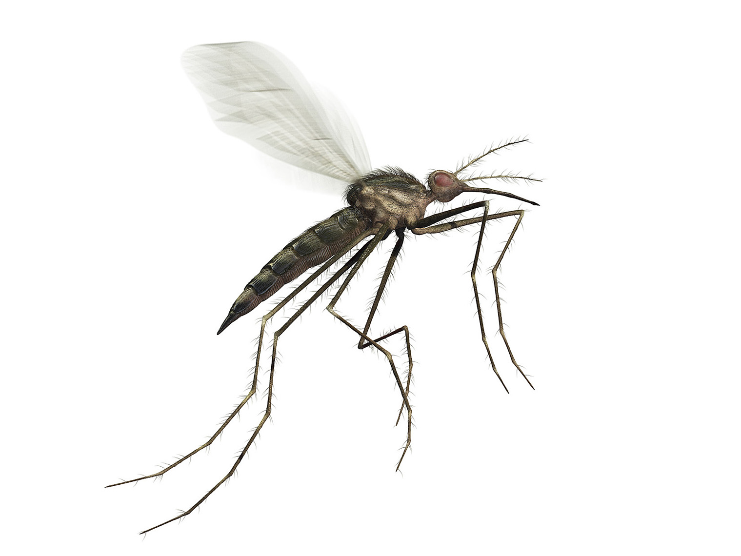 CGI Mosquito detail for OFF! campaign