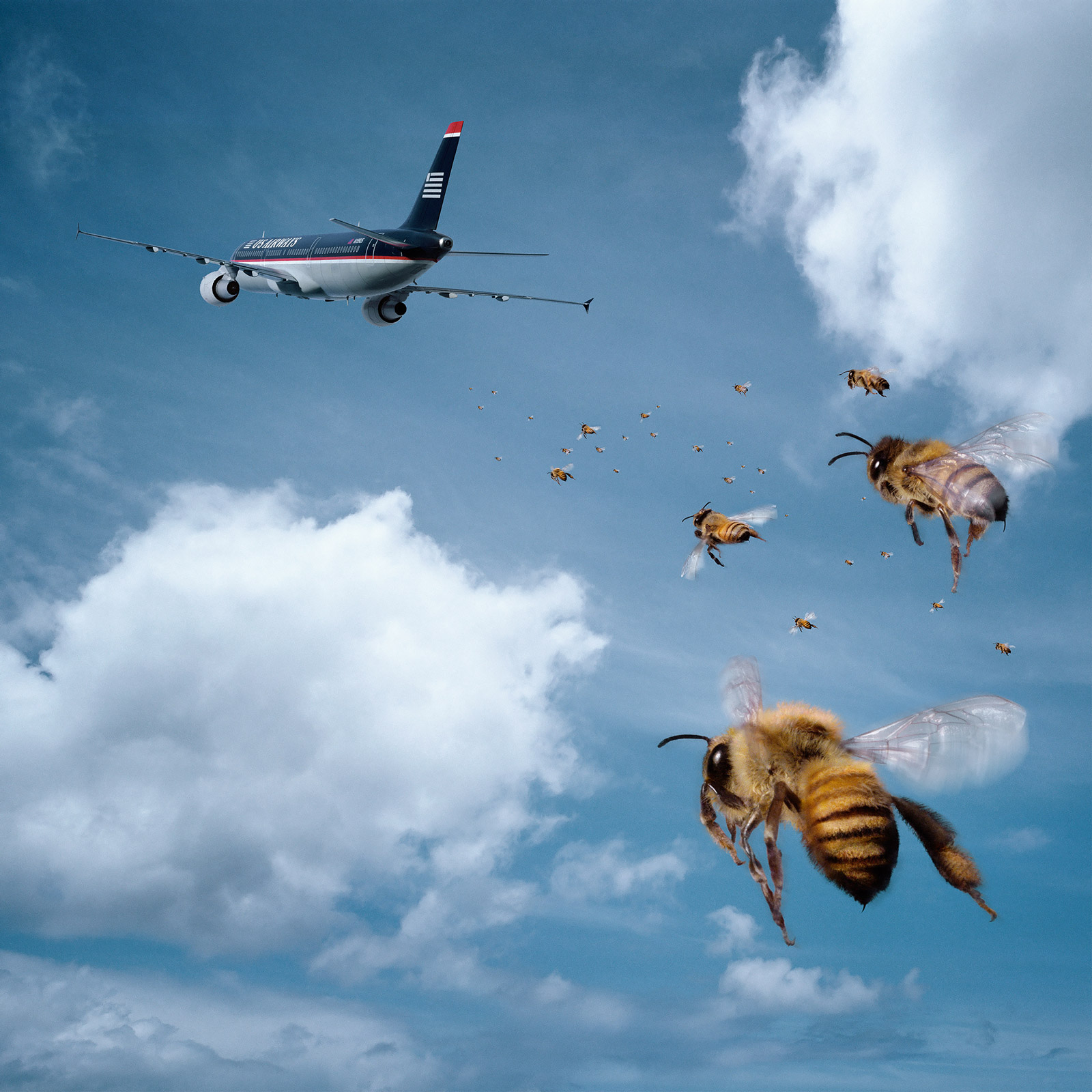 """Fresh Flowers"" US Airways  