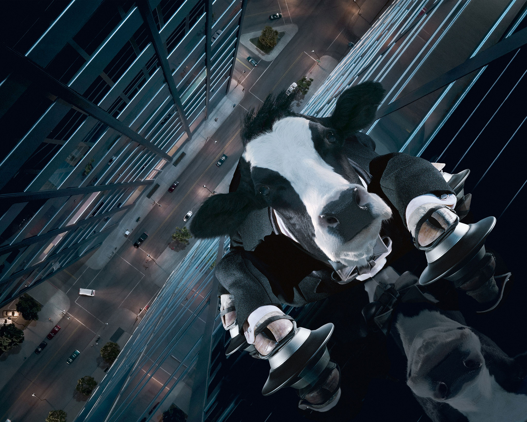 Secret Agent Cows | cow climbing high rise building |  Glen Wexler | Advertising Photographer