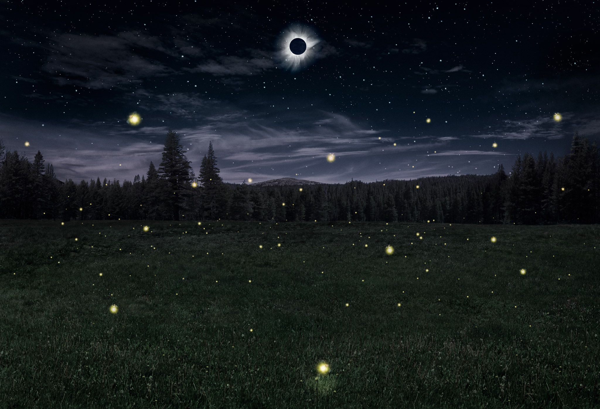 fireflies + eclipse