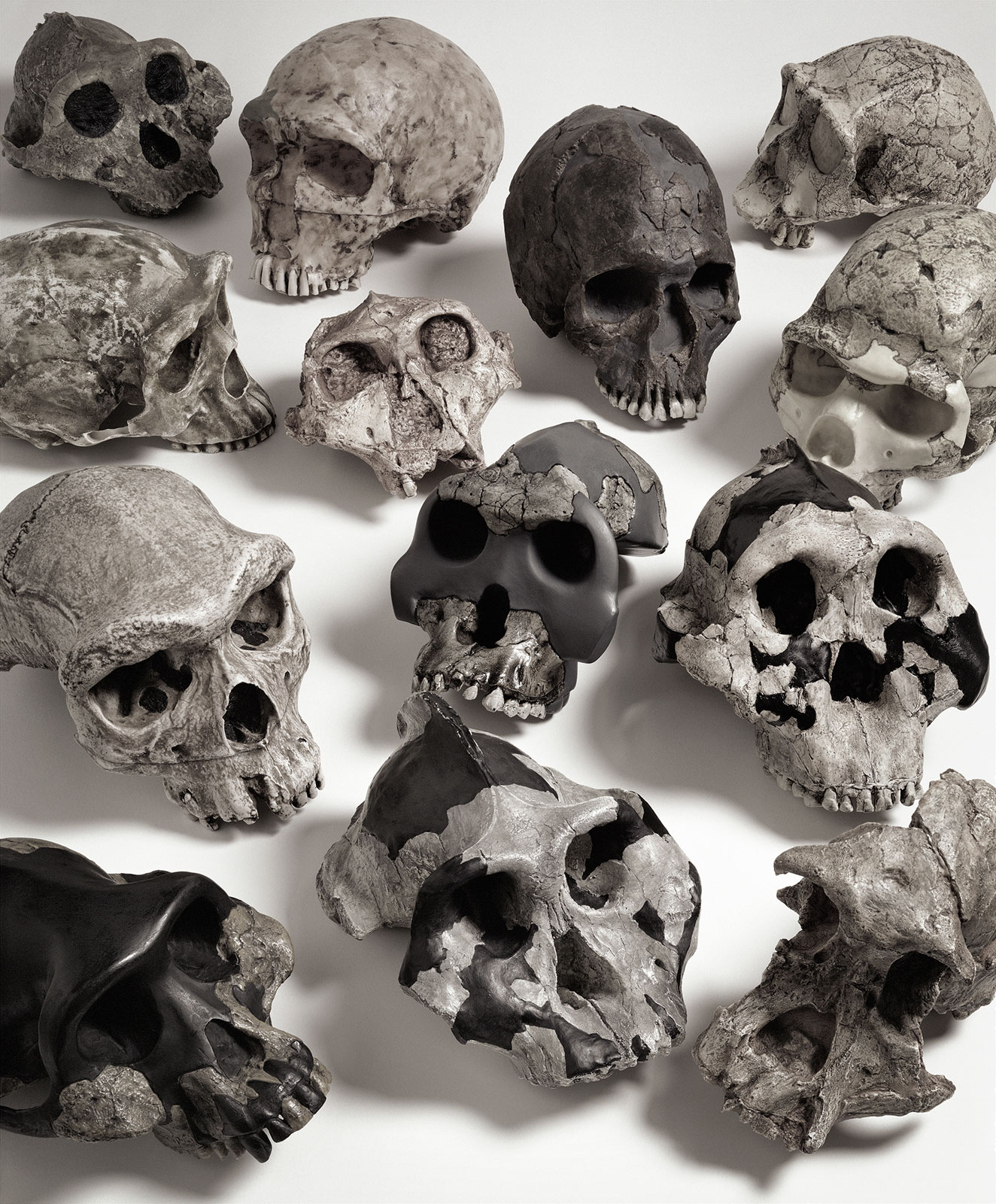 """Evidence of Evolution"" TIME  
